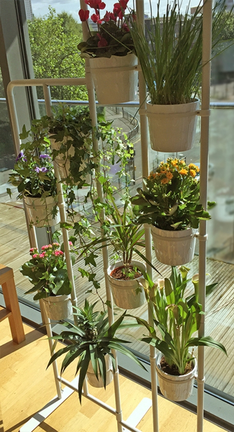 My-Vertical-Garden-03